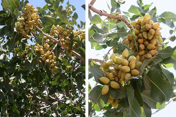 Healthy nuts to eat -Brazil nuts, Peanuts and Pistachios