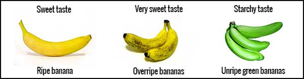 differently ripened bananas