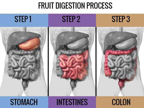 fruit digestion process